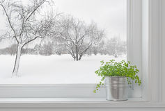 winter-landscape-seen-window-green-plant-29565546